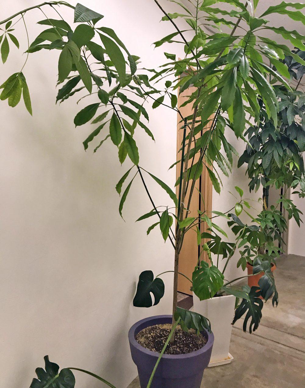 ハニカムシンボルツリー挿し木