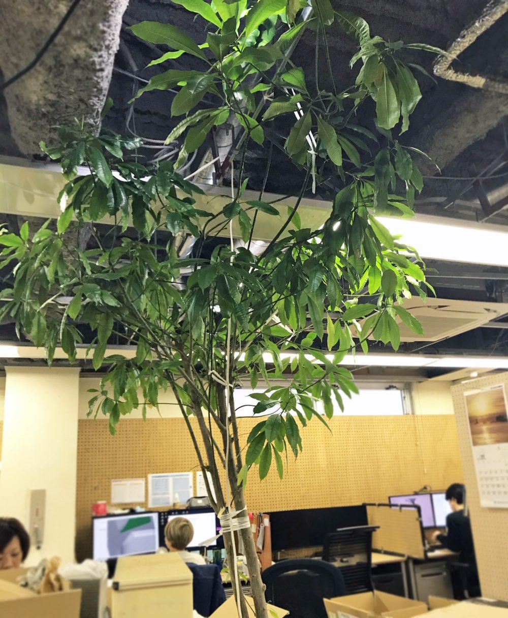 ハニカムシンボルツリー2019葉っぱいっぱい