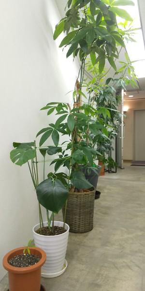 6Fの植物2