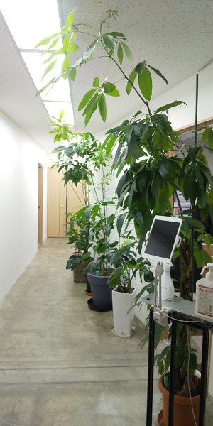 6Fの植物
