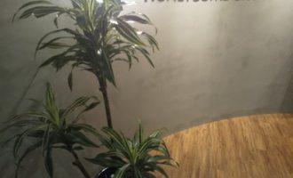 入口の木 ドラセナ